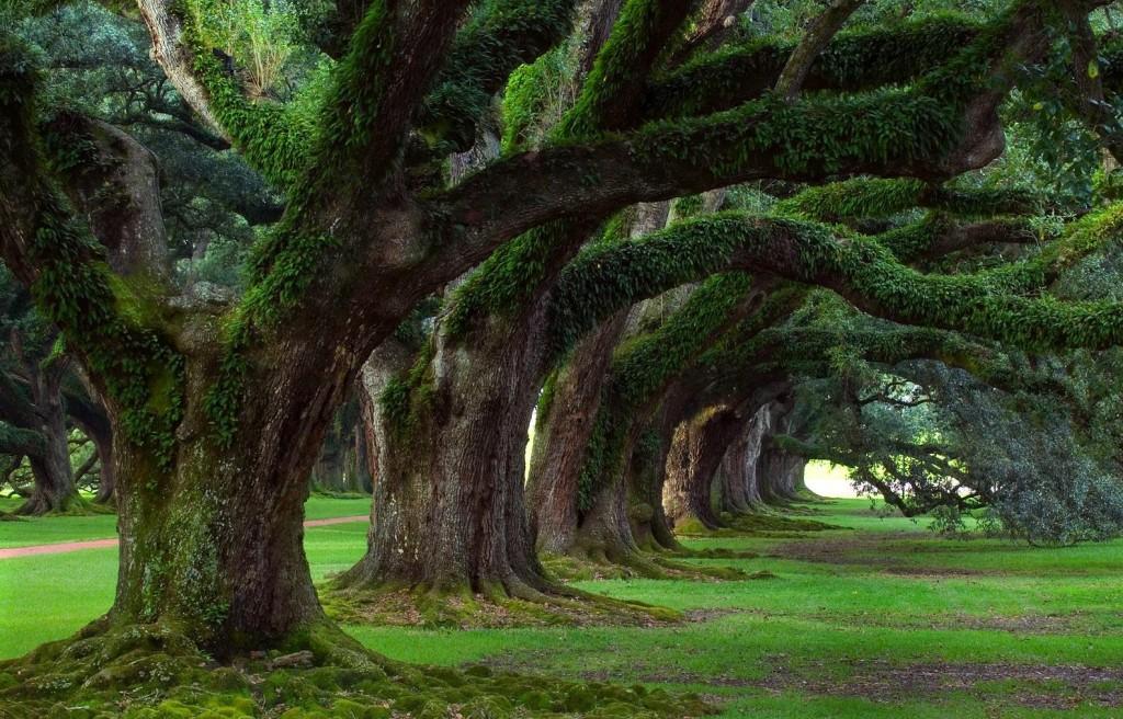femme, arbres, J'ai appris en tant que femme, en tant que mère
